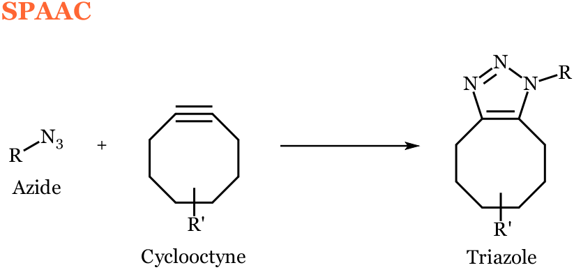 pennmri_org_spaac