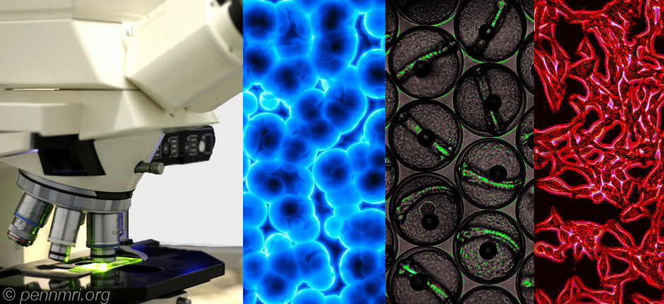 penn_mri_org_molecular_imaging